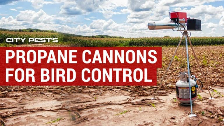 best propane cannons for bird control