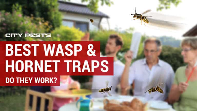 best wasp and hornet traps