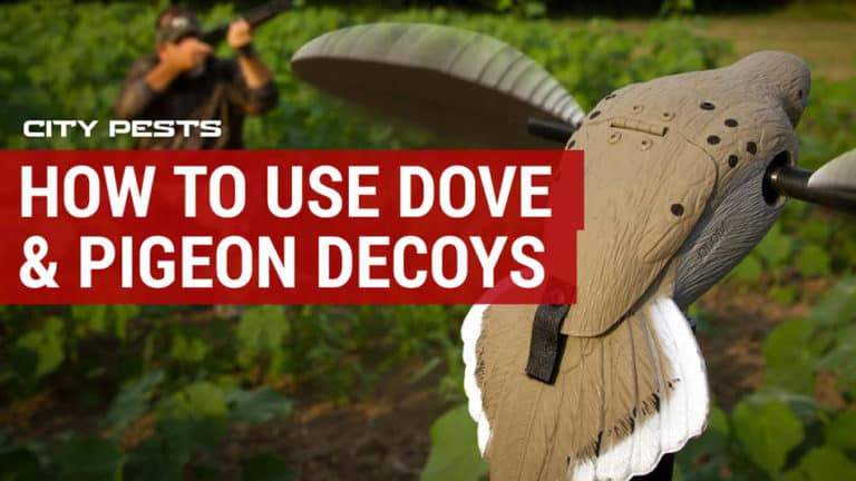 best dove and pigeon decoys