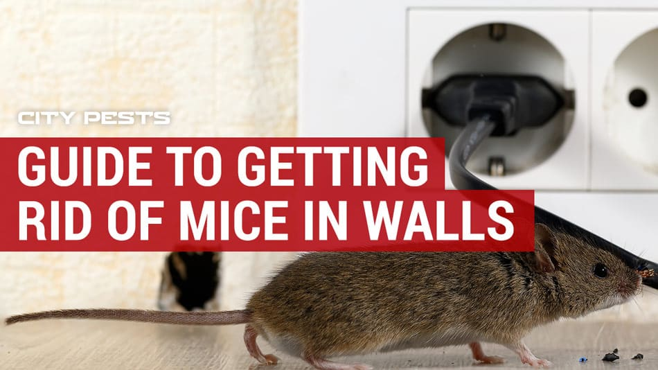 how to get rid of mice in walls