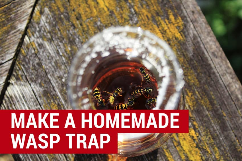 how to make a homemade wasp trap