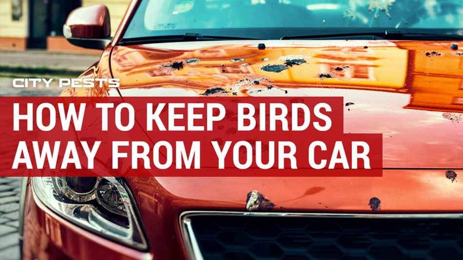 how to keep birds away from your car