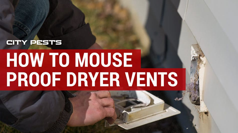 how to mouse proof dryer vents