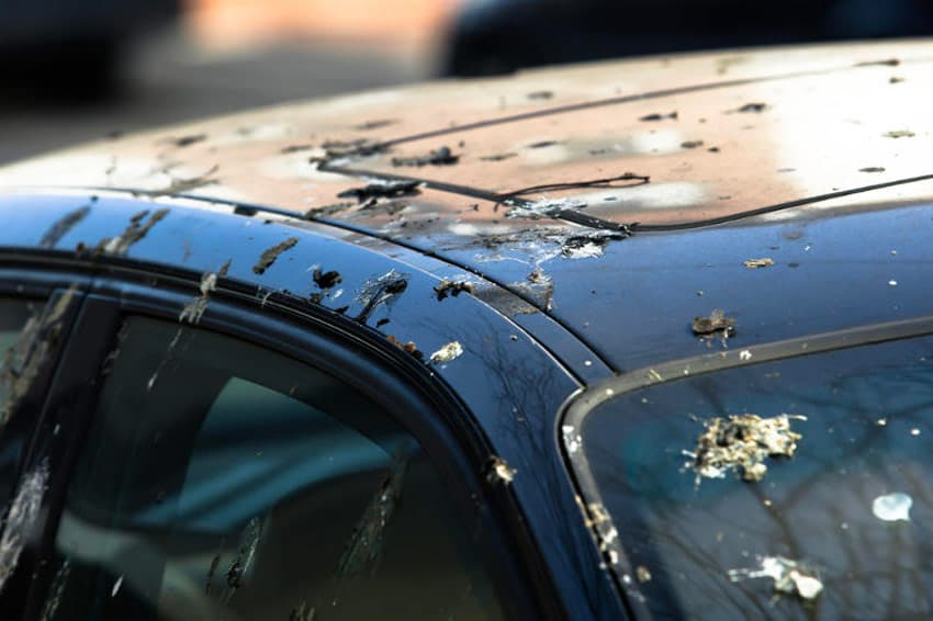 how to stop birds from pooping on car