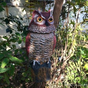Where to place owl decoys