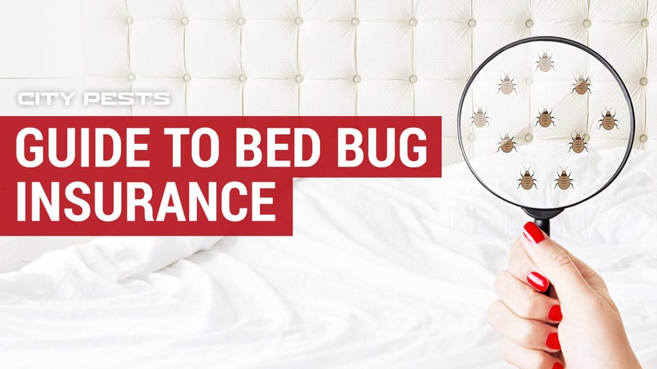 bed bug insurance