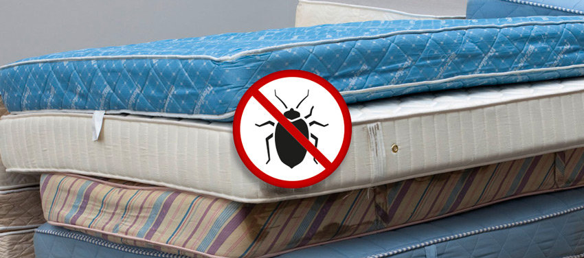 bed bug mattress warning