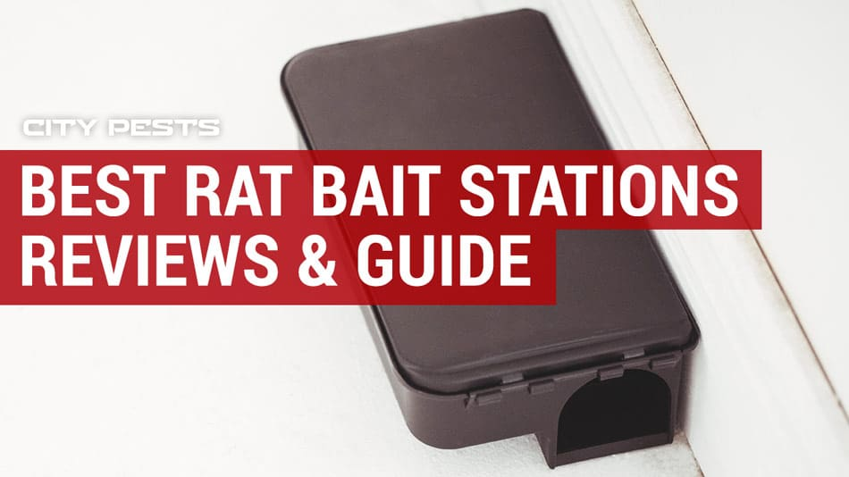 best rat bait stations reviews
