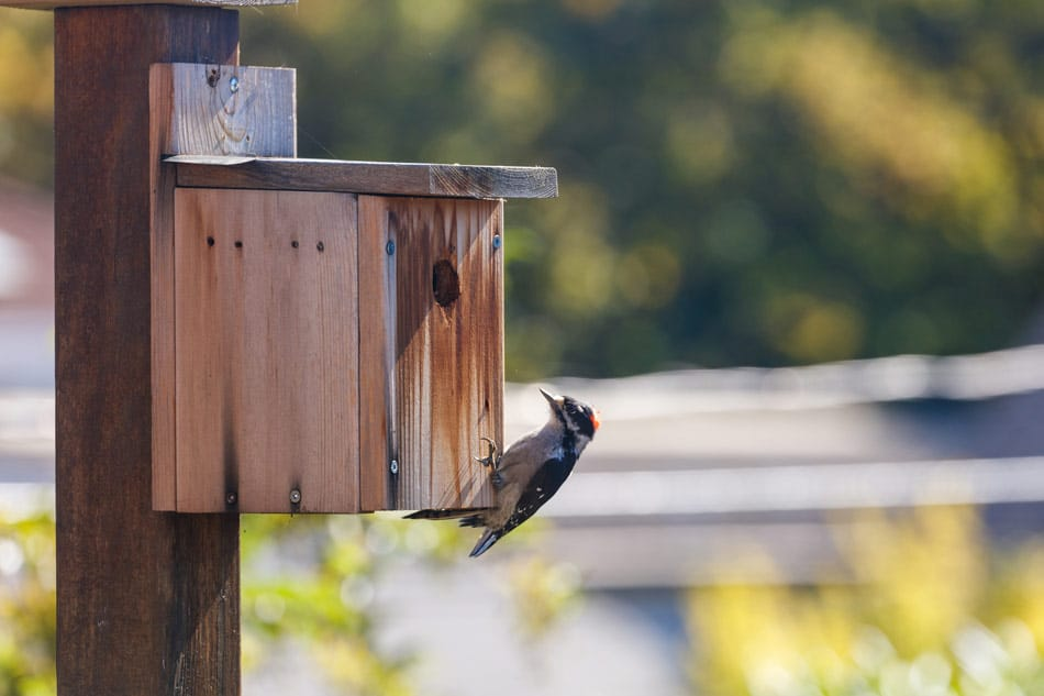 best woodpecker bird houses