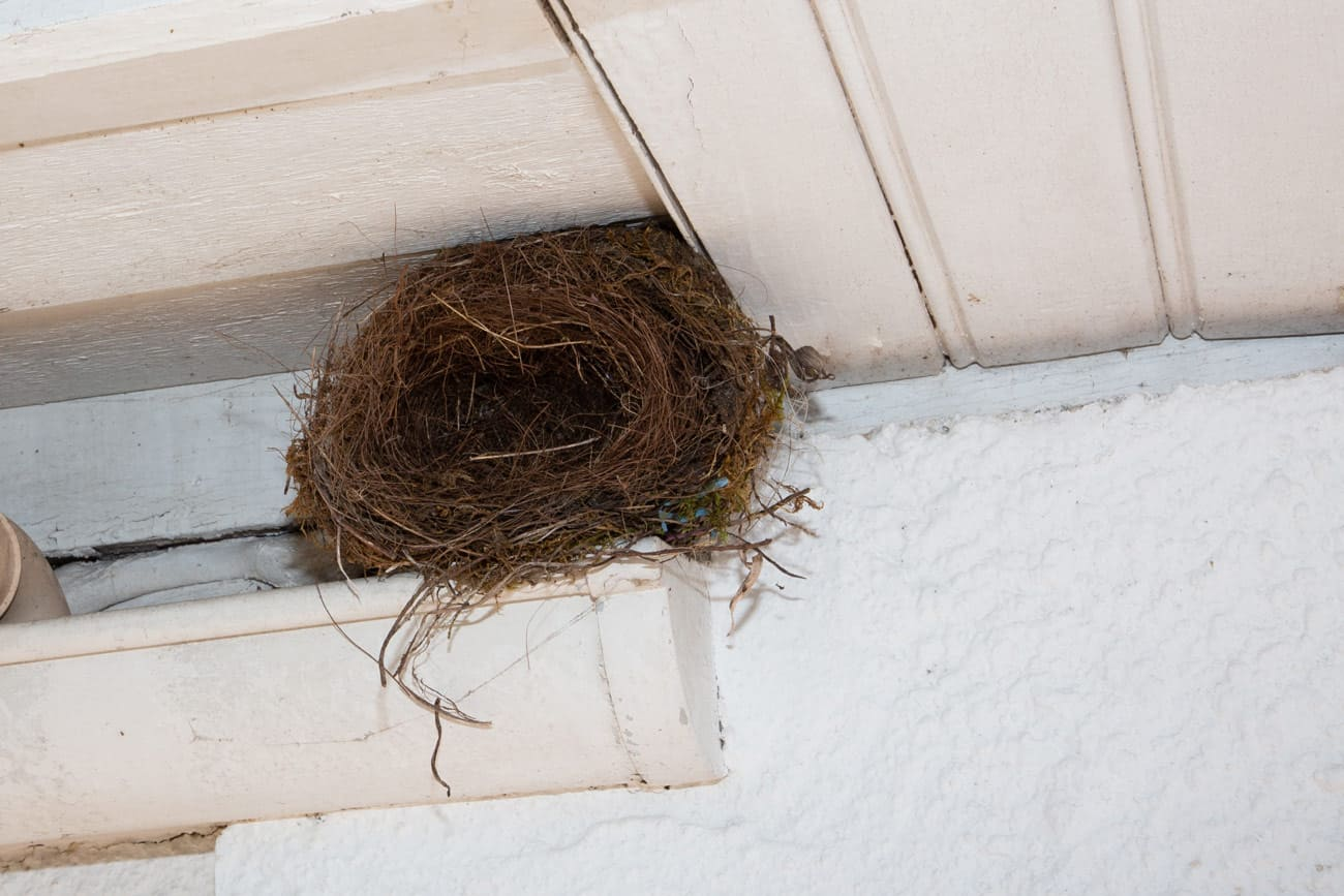 bird nest under garage roof