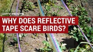 reflective scare tape for birds