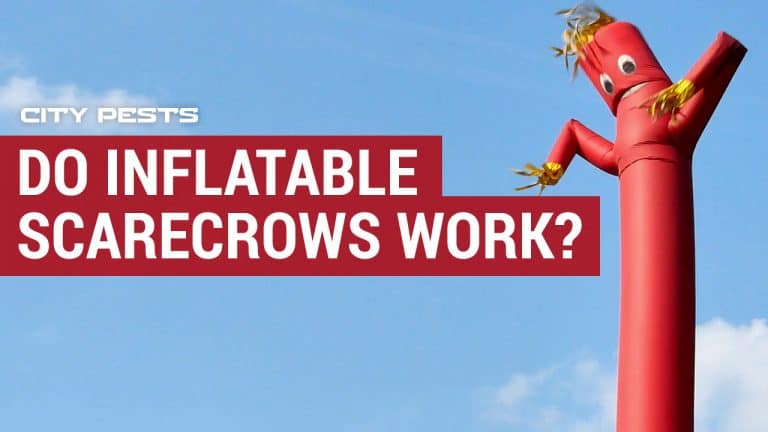 inflatable scarecrows to scare birds