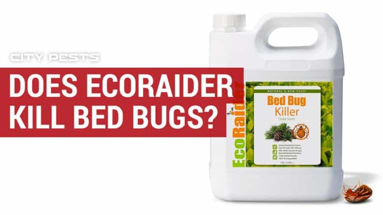 does ecoraider kill bed bugs and eggs
