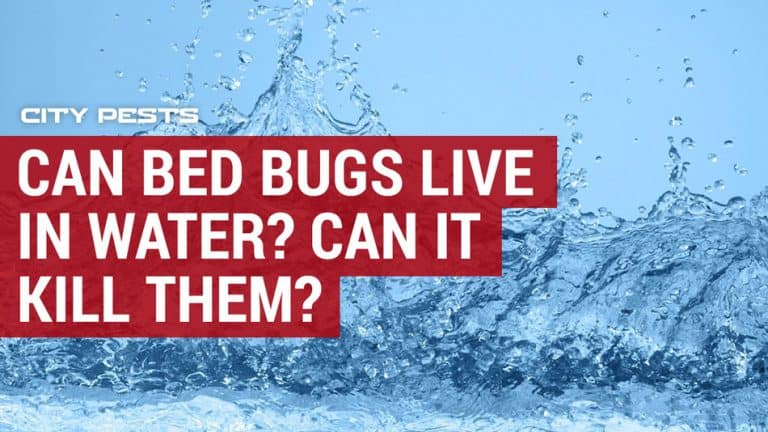 can water kill bed bugs
