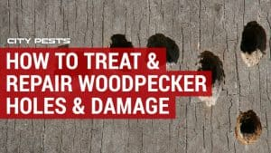 how to treat and repair woodpecker damage and holes
