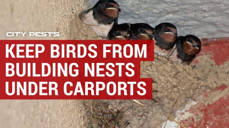 how to keep birds from building nests under carports