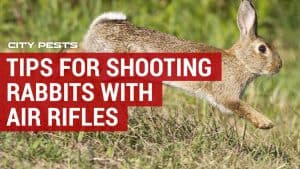 how to shoot rabbits with an air rifle