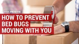 how to stop bed bugs moving with you