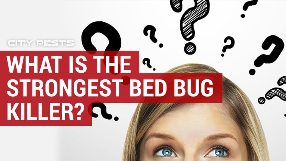 what is the strongest bed bug killer