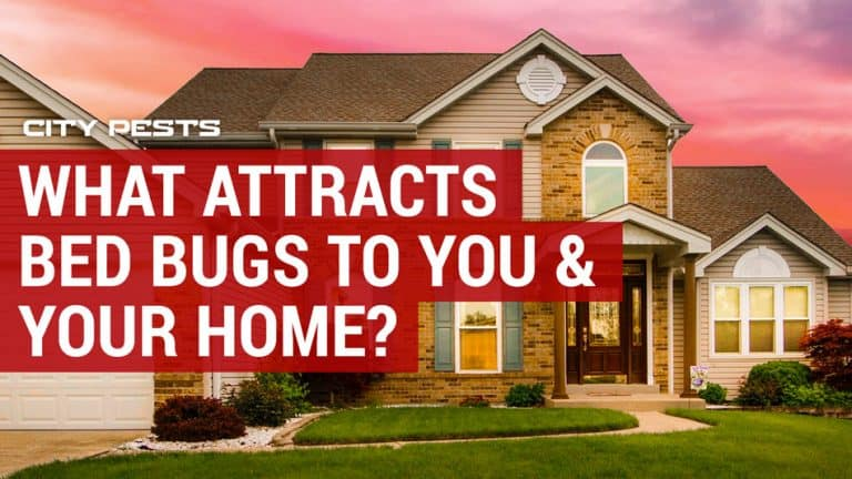 what attracts bed bugs to you and your home