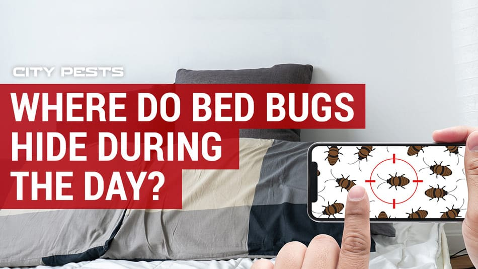 where do bed bugs hide during the day