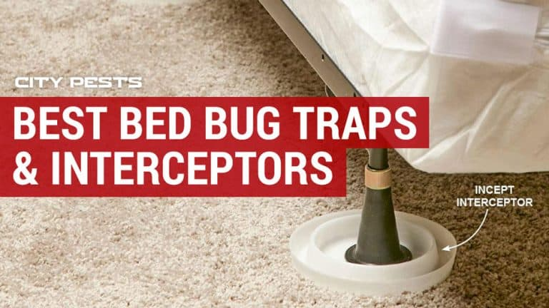best bed bug traps and interceptors