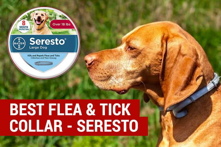 best flea and tick collar