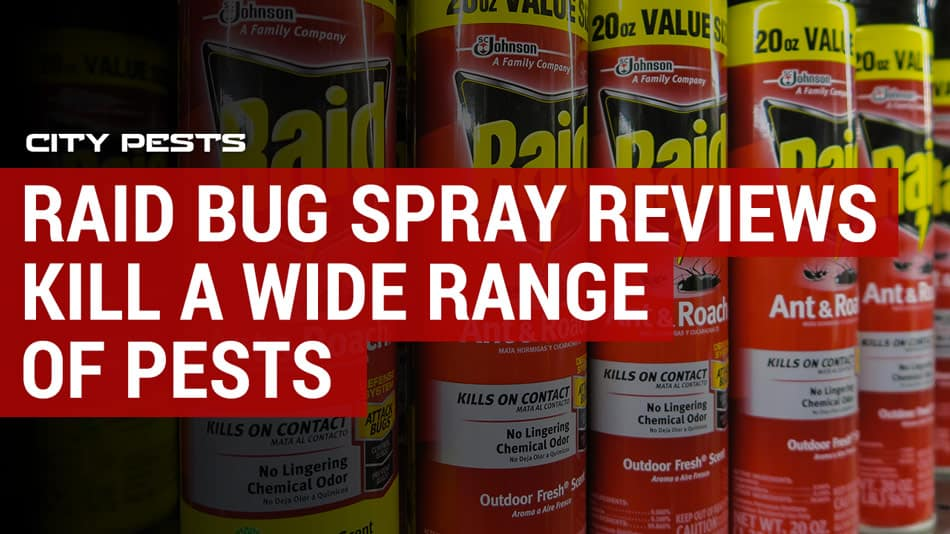 best raid bug spray reviews