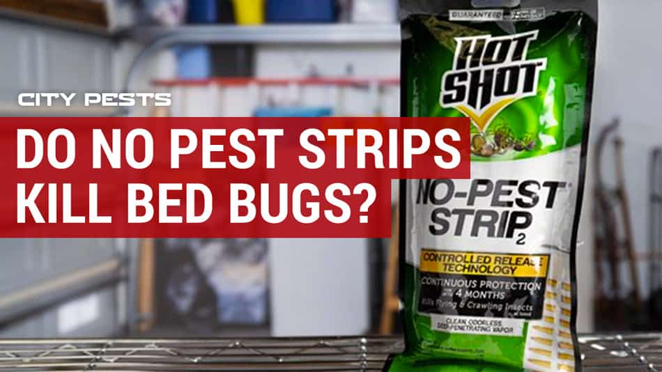 do hot shot no pest strips kill bed bugs