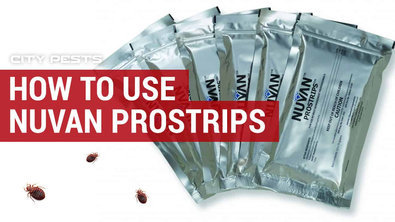 how to use nuvan prostrips to kill bed bugs