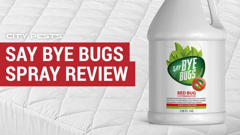 Best Diy Pest Control Products Control Your Infestation