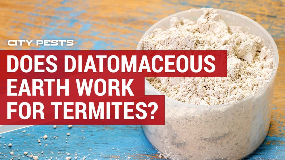 does Diatomaceous Earth work for Termites