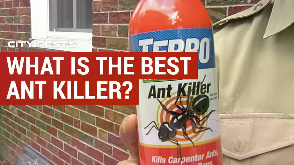 best ant killer reviews