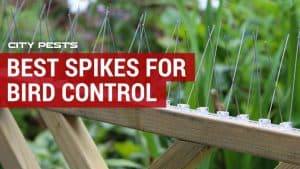 best bird spikes to keep pigeons away