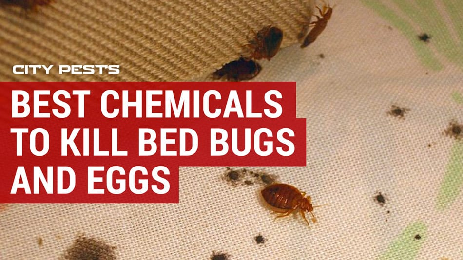 best chemicals to kill bed bugs and eggs