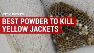 best insecticide powder to kill yellow jacket nests