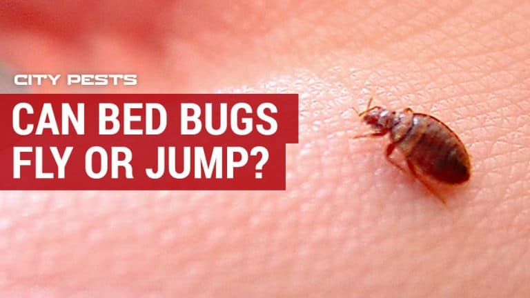 can bed bugs fly or jump
