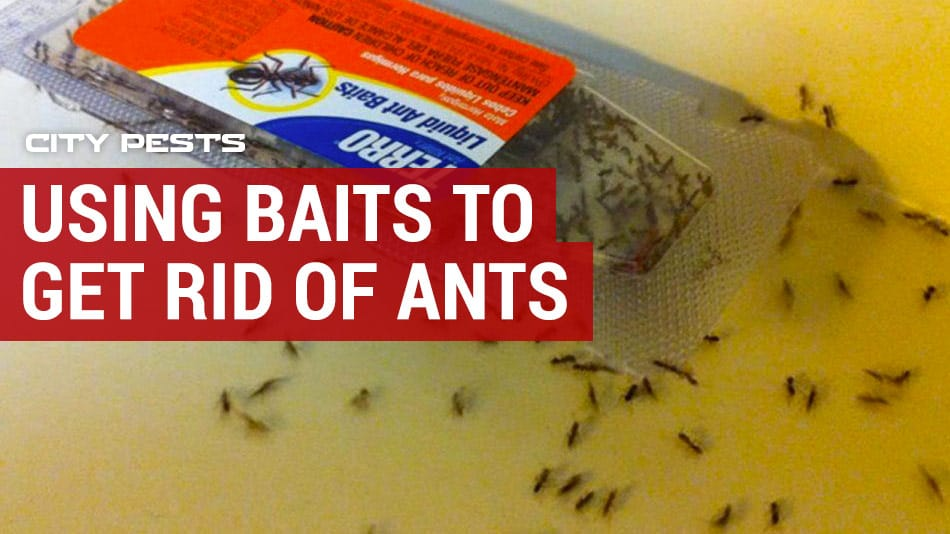 using baits and gels to get rid of ants