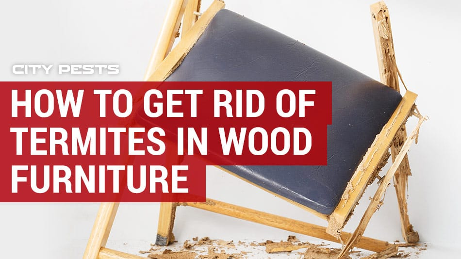 how to get rid of termites in wood furniture