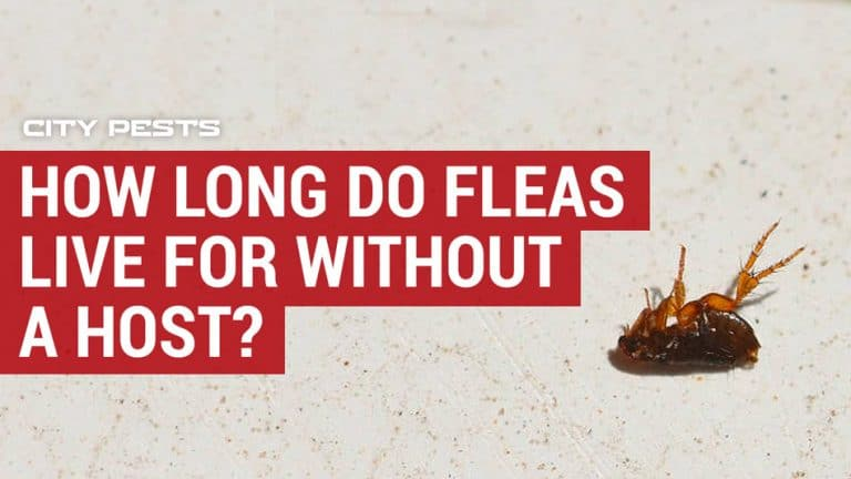 how long do fleas live for without a host