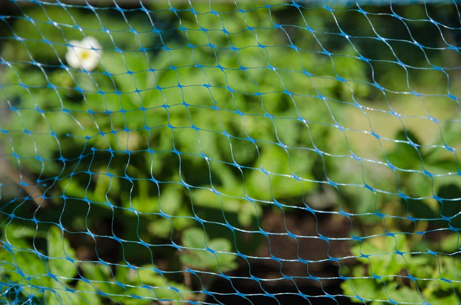 plastic bird netting in garden to protect plants