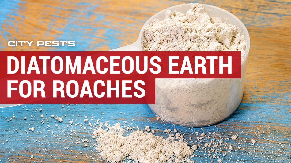 how to use Diatomaceous Earth for roaches