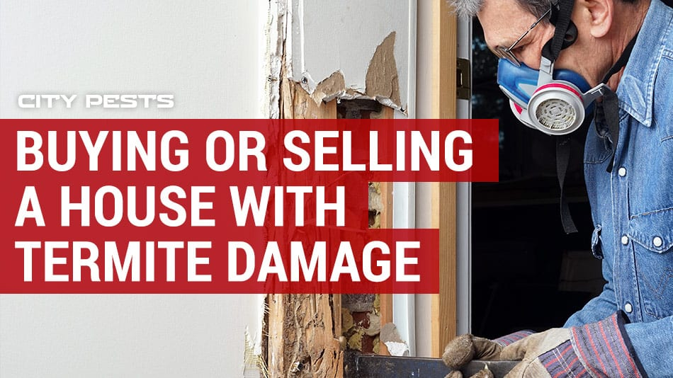 buying or selling a house with termite damage