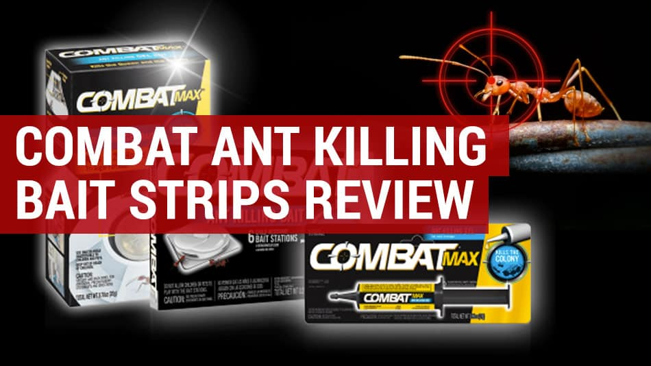 combat ant killing bait review