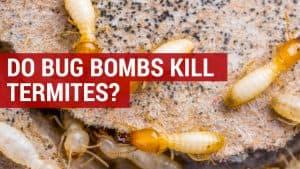 do bug bombs kill termites
