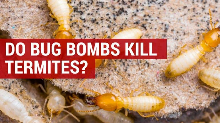 do bug bombs kill termites