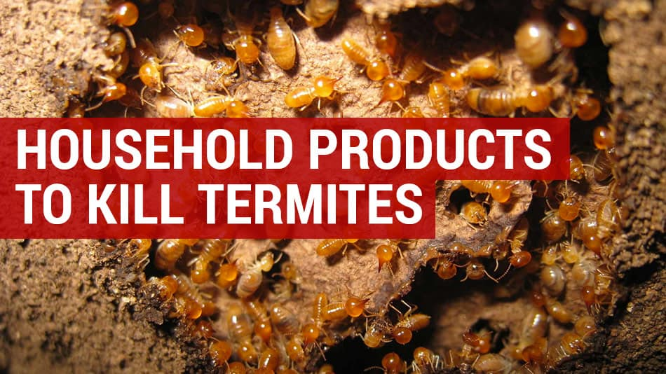kill termites with household products