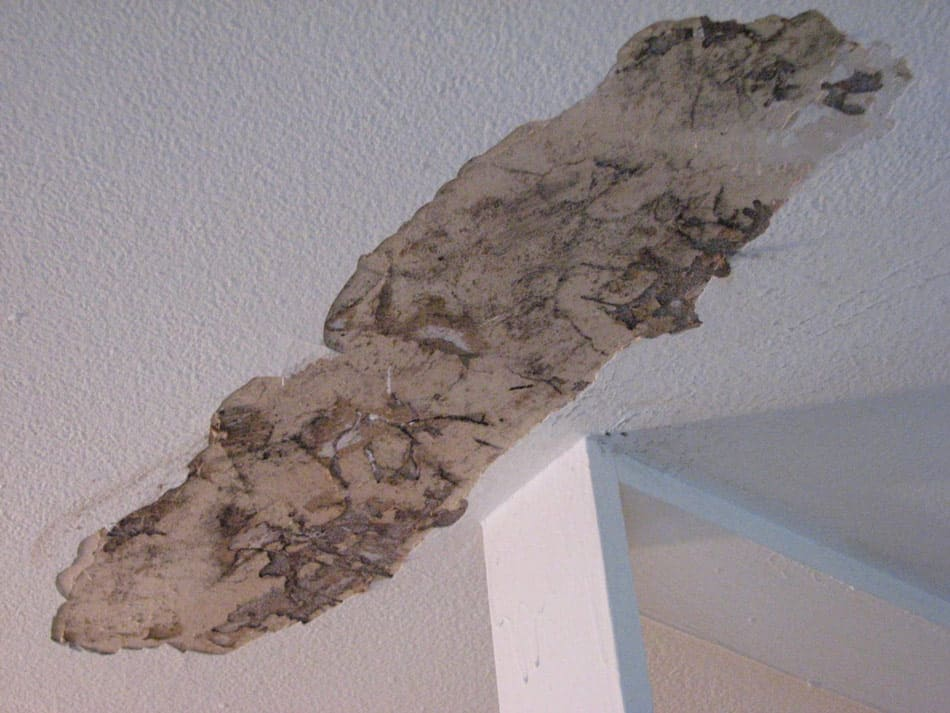 termite damage in ceilings