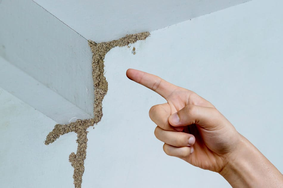 evidence and signs of termite damage