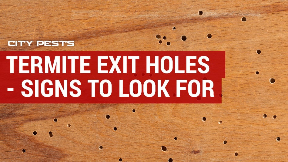 Termite Exit Holes In Drywall Sheetrock Or Ceiling Signs To Look For